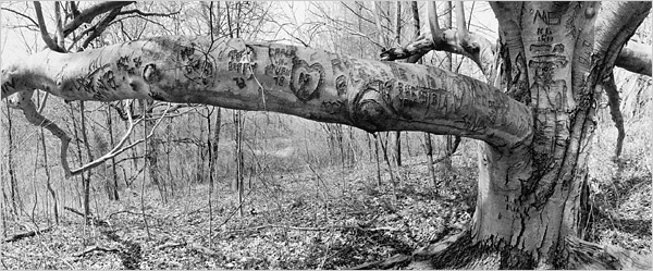 [Fraenkel Gallery, San Francisco]